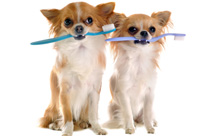 טיפול בבעיות חניכיים ושיניים