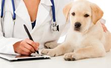 חיסונים לכלבים ומה הם מונעים