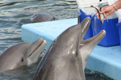 אטרקציות באילת ריף הדולפינים