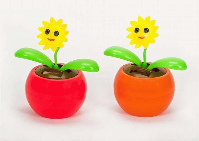 פרח סולארי-חמניה