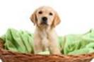 מחלות אצל כלבים גזעיים- אטופיה