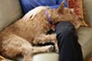 טיפול בבעלי חיים לעת זקנה