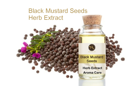 מיצוי מצמח מרפא חרדל שחור