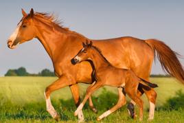 טיפול באמצעות רכיבה על סוסים סוסים רוכבים