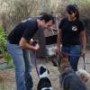 כלבנות טיפולית - אילוף כלבים ותרפיה