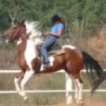 רכיבה על סוס הכשרת מדריכי רכיבה טיפולית