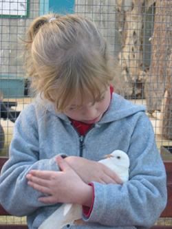 ילדה מלטפת יונה טיפול בעזרת בעלי חיים
