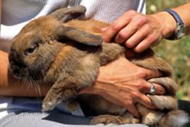 ליטוף בעלי חיים ככלי לוויסות חושי אצל ילדים