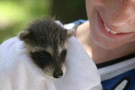 ילד מחזיק חיה - המטרות הטיפוליות בטיפול עם חיות