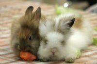 ארנבים פינת חי לטיפול בעזרת בעל חיים