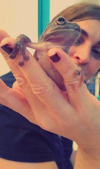 סלמנדרה פינת חי לטיפול בעזרת בעל חיים