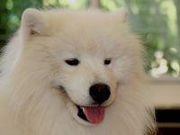 כלב פינת חי לטיפול בעזרת בעל חיים