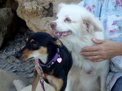 זוג כלבים טיפול רגשי הנעזר בכלבים טיפוליים