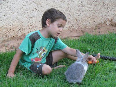 ילד מאכיל ארנב טיפול רגשי בעזרת בעלי חיים