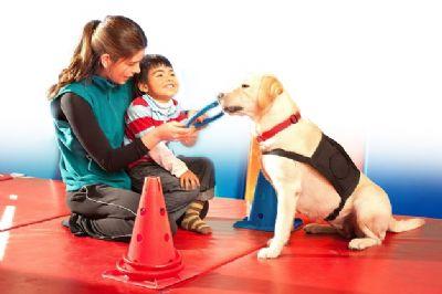 לימודי הכשרת כלב טיפולי מטפלת מטופל וכלב סיוע