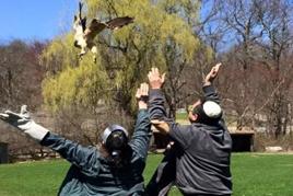 משחררים ציפור לחופשי טיפול בעזרת בעלי חיים