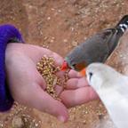 האכלת יונים חיה טיפולית