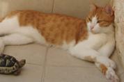"""חתול וצב תרפיה בעזרת בע""""ח"""