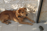 """כלב וצב טיפול בעזרת בע""""ח"""