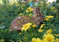 טיפול רגשי בעזרת ארנבון