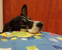 טיפול רגשי בעזרת כלב