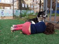 טיפול רגשי בעזרת כלב טיפולי