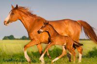 רכיבה טיפולית סוס וסייח דוהרים