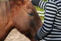 תרפיה אמצעות רכיבה על סוסים ילדה מלטפת סוס