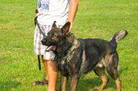 כלב עזר - ילד מחזיק כלב