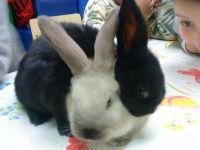 זוג ארנבים פינת חי לטיפול בעזרת בעל חיים