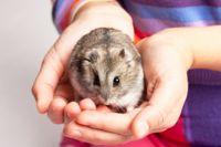 אוגר סיבירי - טיפול בעזרת בעלי חיים