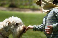 כלב מלקק ילד בטיפול בעזרת כלבים