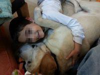 ילד מחבקת כלב חיה טיפולית