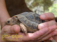 ילד מחזיק צב טיפול בעזרת בעלי חיים