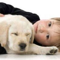 לימודים טיפול בעזרת בעלי חיים - ילד עם כלב