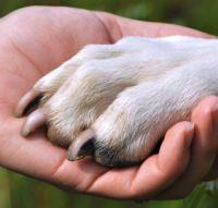 לימודי כלבנות טיפולית למטפלים כלב נותן יד לילד
