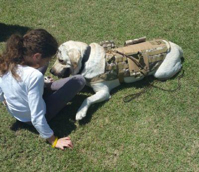 המרכז להכשרות כלבי שירות