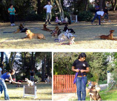 אנשים מאלפים כלבים טיפולים