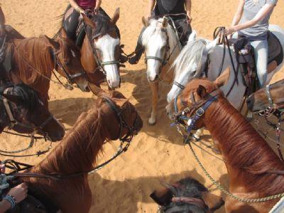 רוכבים על סוסים הכשרת מדריכי רכיבה טיפולית