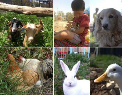 כלב ברווז תרנגולות חיות פינת ליטוף