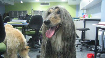 לימודי קורס ספרות כלבים