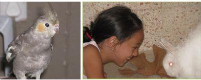 ילדה עם ארנב ותוכי חיות טיפוליות