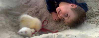 """טיפול בעזרת בע""""ח ילד עם אפרוחים"""