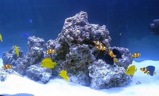 מסלעה ודגים באקווריום מרינה