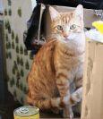 מבצע אימוץ חתולים - חורף 2016