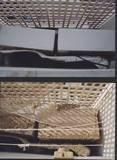 מסתור כביסה לפני ואחרי רשת יונים