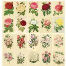 פרחי וינטאג' 2 דפים לחיתוך
