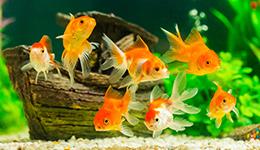 אוכל וציוד לדגים