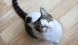 אוכל וציוד לחתולים