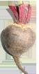 סלק כמזון פונקציונלי בתהליכי דטוקסיפיקציה